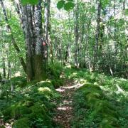 ligne de parcelles en sous bois